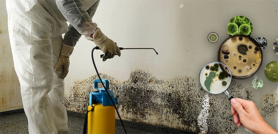 Black Mold Testing Toxic Mold Testing Kits For Home And