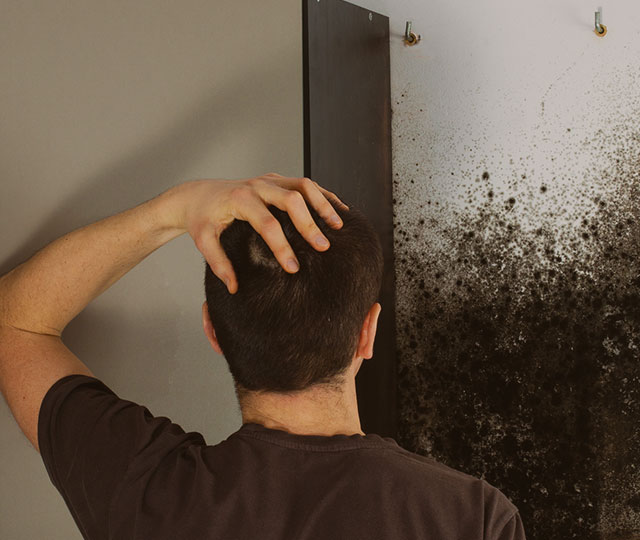 Black mold testing toxic mold testing kits for home and - What to do about mold ...
